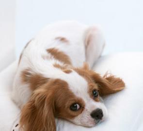 ペットのカゴ、ベッド、トイレの防臭に